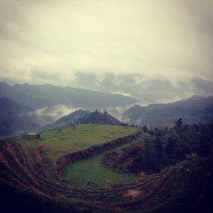 Cloud-shrouded rice terraces
